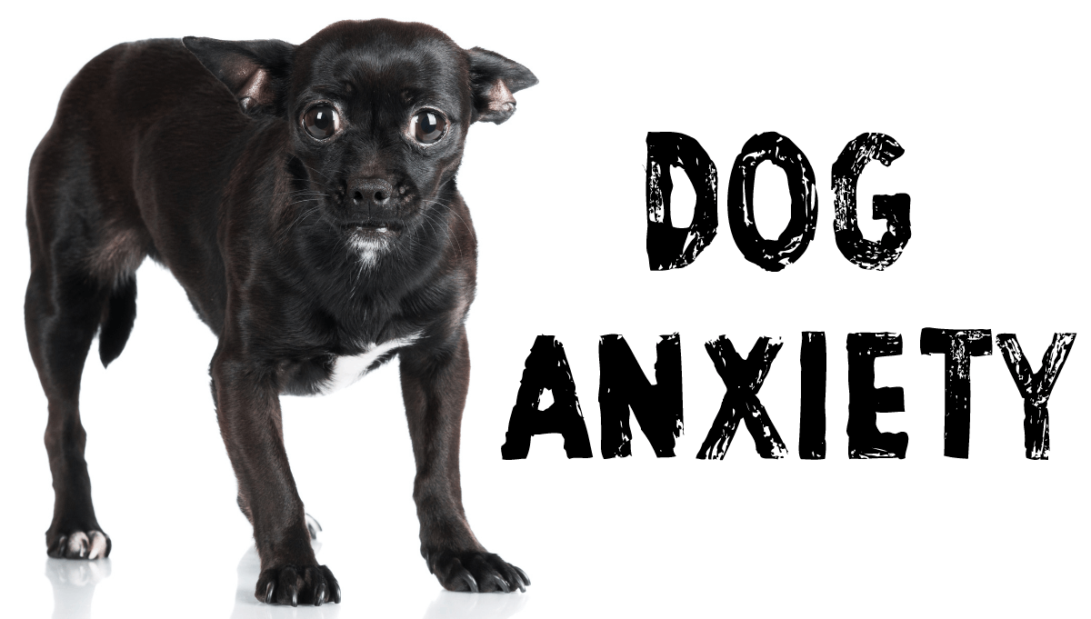 Dog Anxiety Solutions