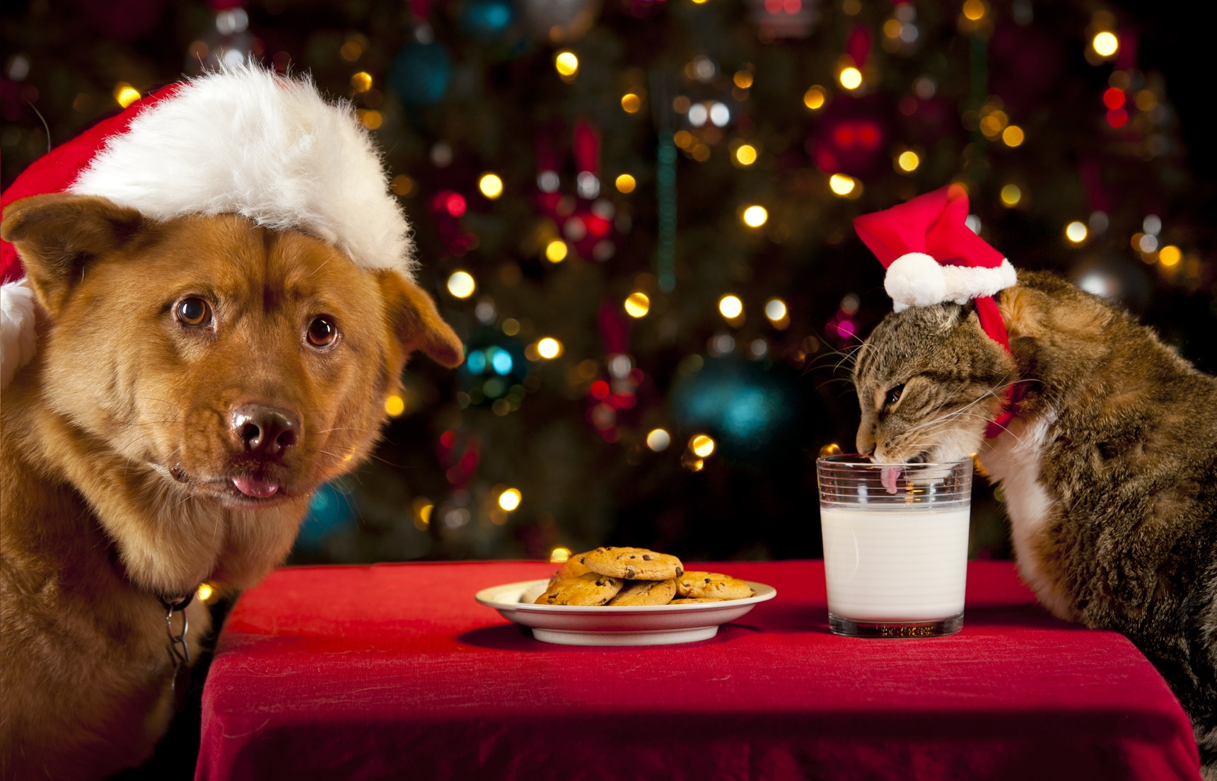 Christmas Cookies Recipe for Dogs