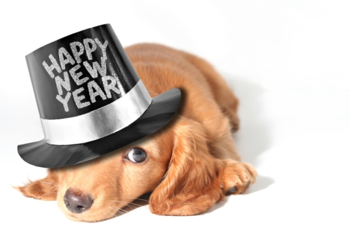 New Years Resolutions for Dog Owners