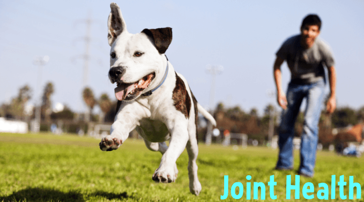 Glucosamine & Chondroitin Dog Joint Supplements