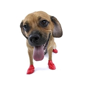 Pawz Small Red Waterproof Dog Boots
