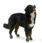Pawz X-Large Green Waterproof Dog Boots