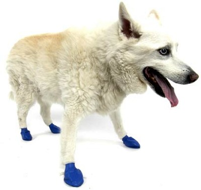 Pawz Medium Blue Waterproof Dog Boots